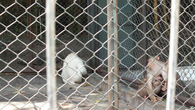 Salah satu koleksi hewan langka di Taman Hewan Siantar