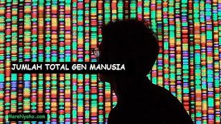 JUMLAH TOTAL GEN MANUSIA, jumlah gen manusia, cara menghitung gen, gen itu apa?