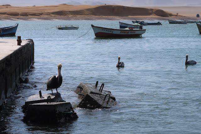 Pelicanos en el pueblo de lagunillas en paracas