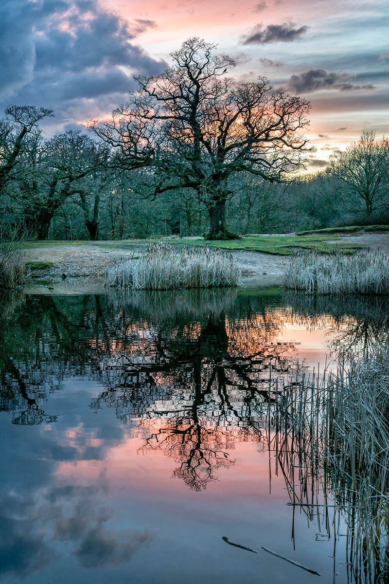 foto de robles (quercus) junto a un lago