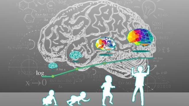 Νους, εγκέφαλος, εκπαίδευση & Σημαντικά ευρήματα των νευροεπιστημών