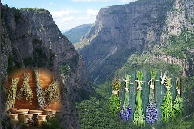 Δημιουργία Κέντρου Αρωματικών και Φαρμακευτικών Φυτών της Ηπείρου - : IoanninaVoice.gr