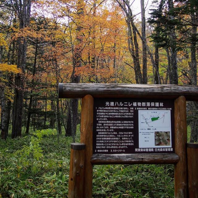 光徳ハルニレ植物群落保護林