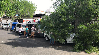 Ventos derrubam árvore em CG; chove em mais de 50 cidades
