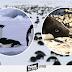 Mueren miles de pingüinos en la Antártida