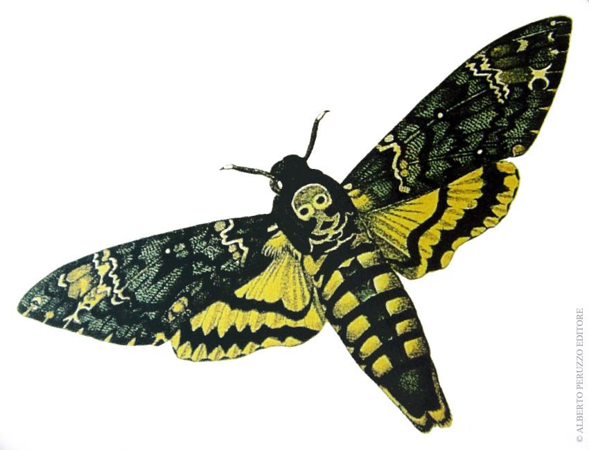 Universo dei lepidotteri 36 la sfinge testa di morto - La funesta finestra ...