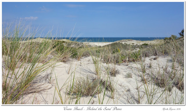 Crane Beach: Behind the Sand Dunes