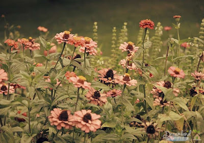 How To Build An Herb Garden