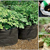 Această tehnică simplă de cultivare a cartofilor vă asigură o producție de cartofi crescuți fără chimicale, folosind suprafețe/spații foarte mici