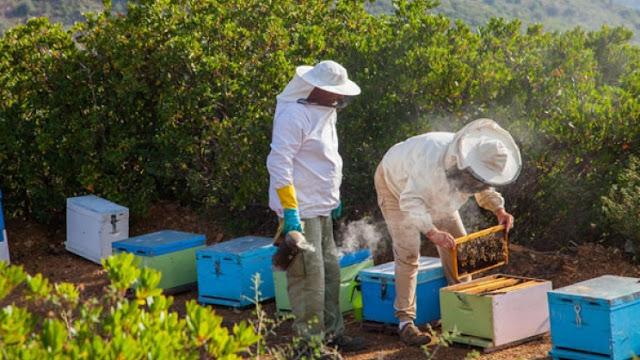 Καμπάνα σε μελισσοκλέφτες στην Λάρισα