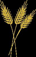 Ramo de trigo - Criação Blog PNG-Free
