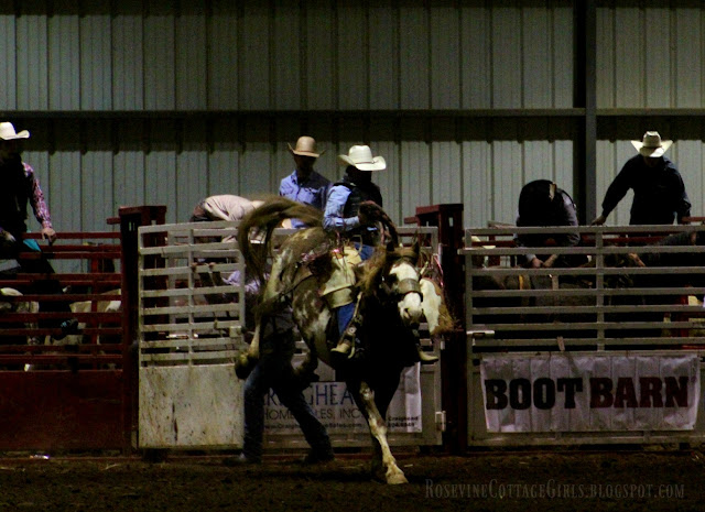 #rodeo #broncriding #cowboys #cows #horses