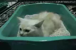 Pasir Zeolit Kucing