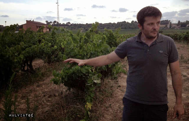 ignasi segui vinyes singulars