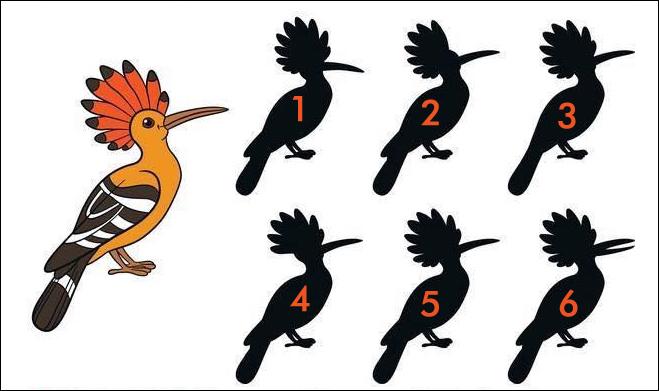 Bird Shadow Riddle