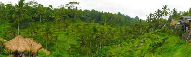 Tegallalang_Panorama_1_post.jpg