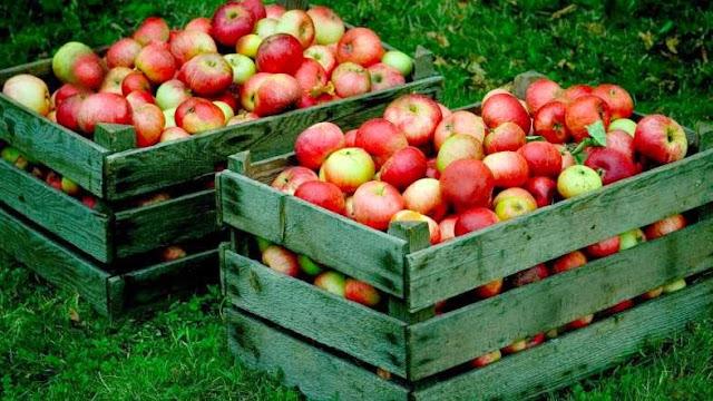 buah-buahan-yang-dapat-mengobati-flu