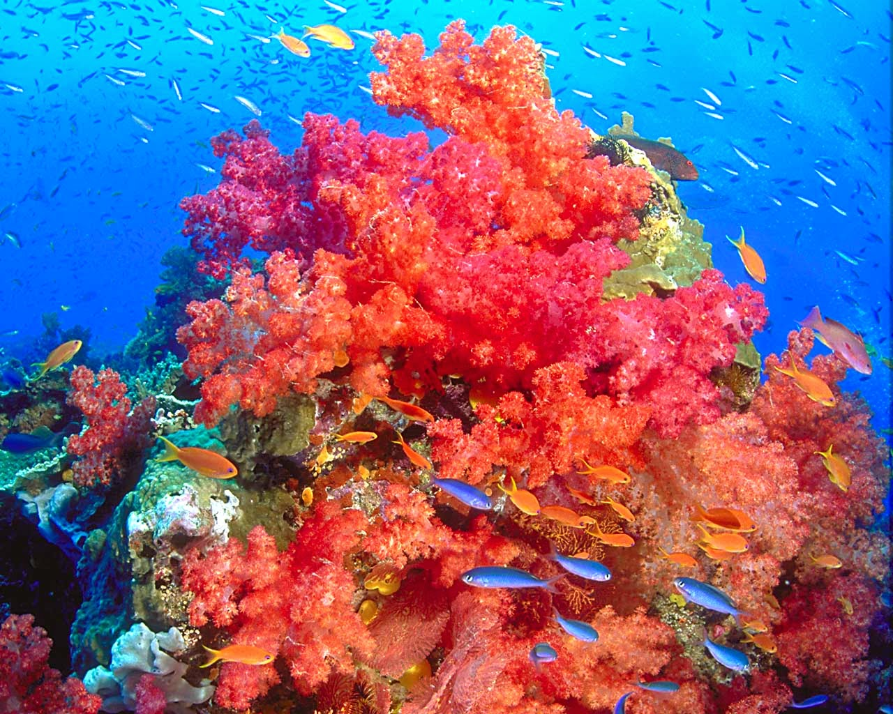 Coral reef hd wallpapers earth blog - Sea coral wallpaper ...