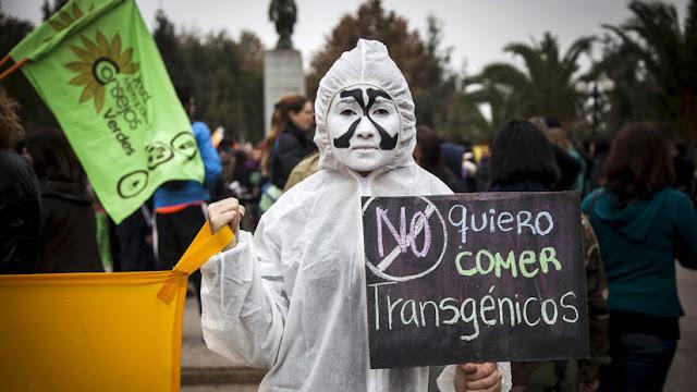 """México, """"invadido"""" por los cultivos transgénicos: ¿Qué hay detrás?"""