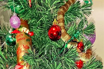 Mulher encontra cobra venenosa na árvore de Natal