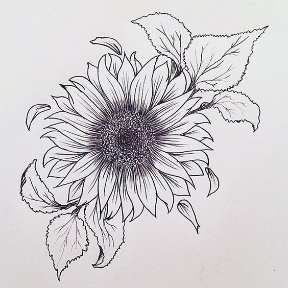 Stunning Drawing Sunflower Tattoo Designs For Girls