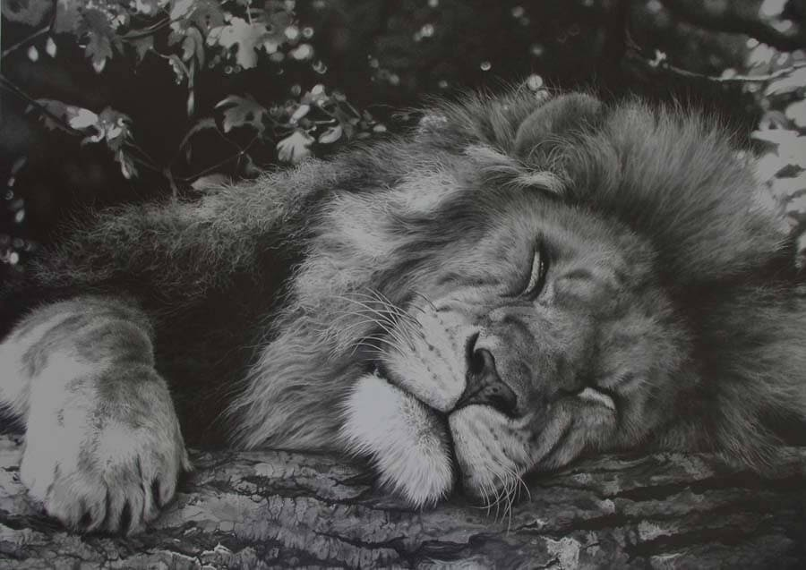 08-Sleeping-Lion-Julie-Rhodes-Wildlife-Animals-Realistic-Pencil-Drawings-www-designstack-co