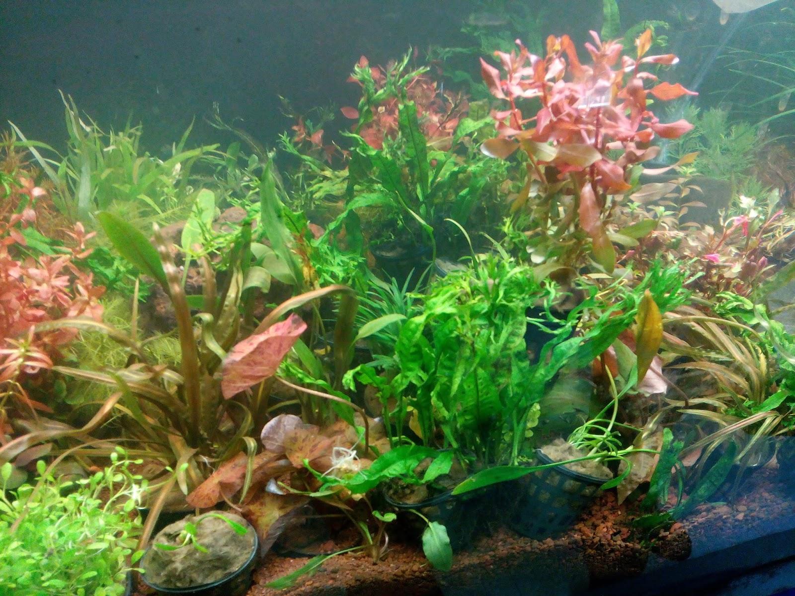 joe s aquaworld for fishes mumbai india 9833898901 live aquarium plants available for