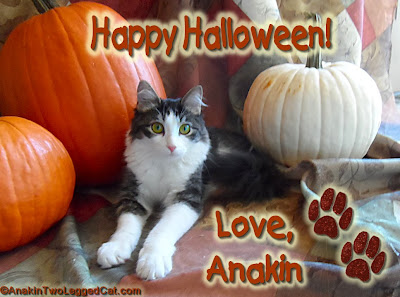 Happy Halloween! Love, Anakin The Two Legged Cat