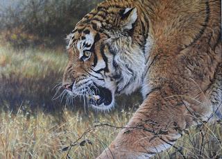 Wildlife Art Prints by Alan M Hunt