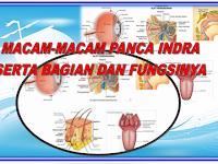 Panca Indra dan fungsinya  materi pelajaran IPA kelas 4 SD/MI