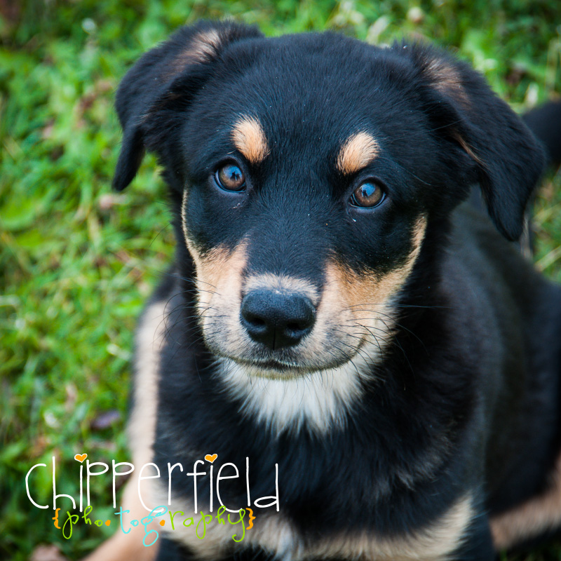 Chipperfield Photography Calgary Portrait Photographer and