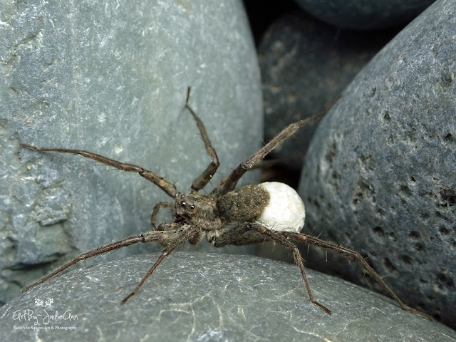 Fast Spider On Beach