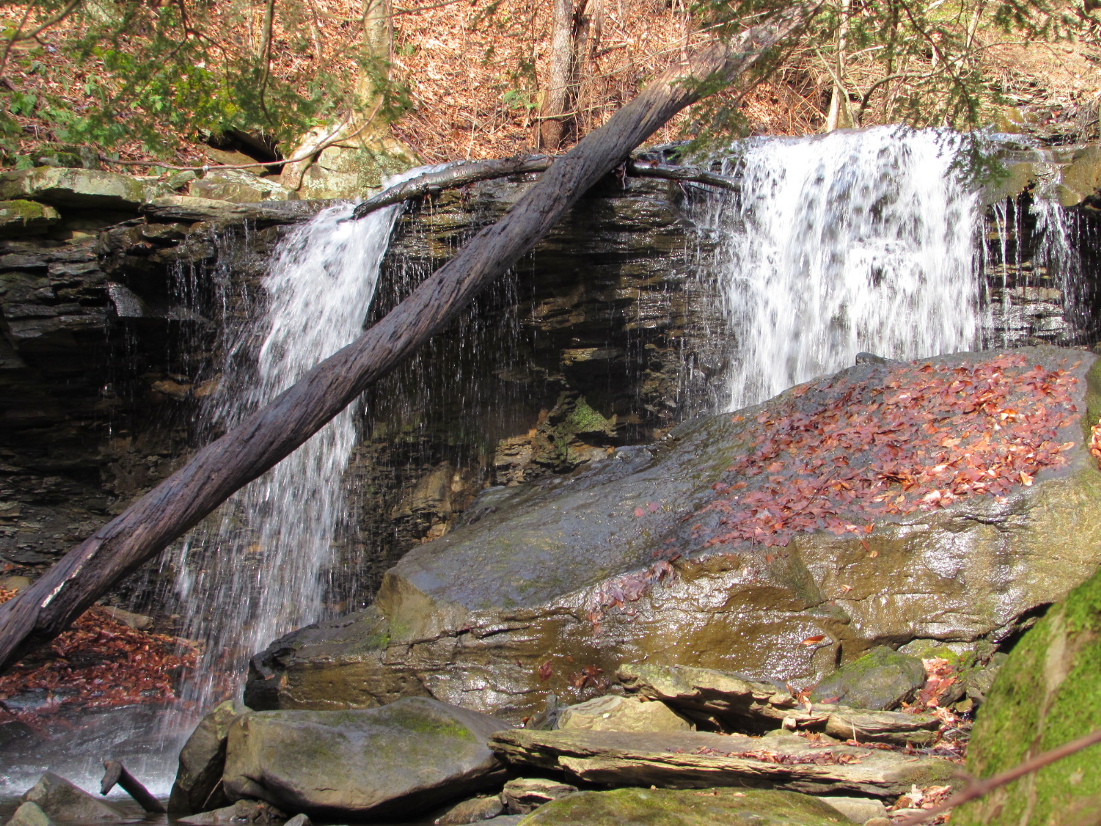 Home To Roaring Run Natural Area