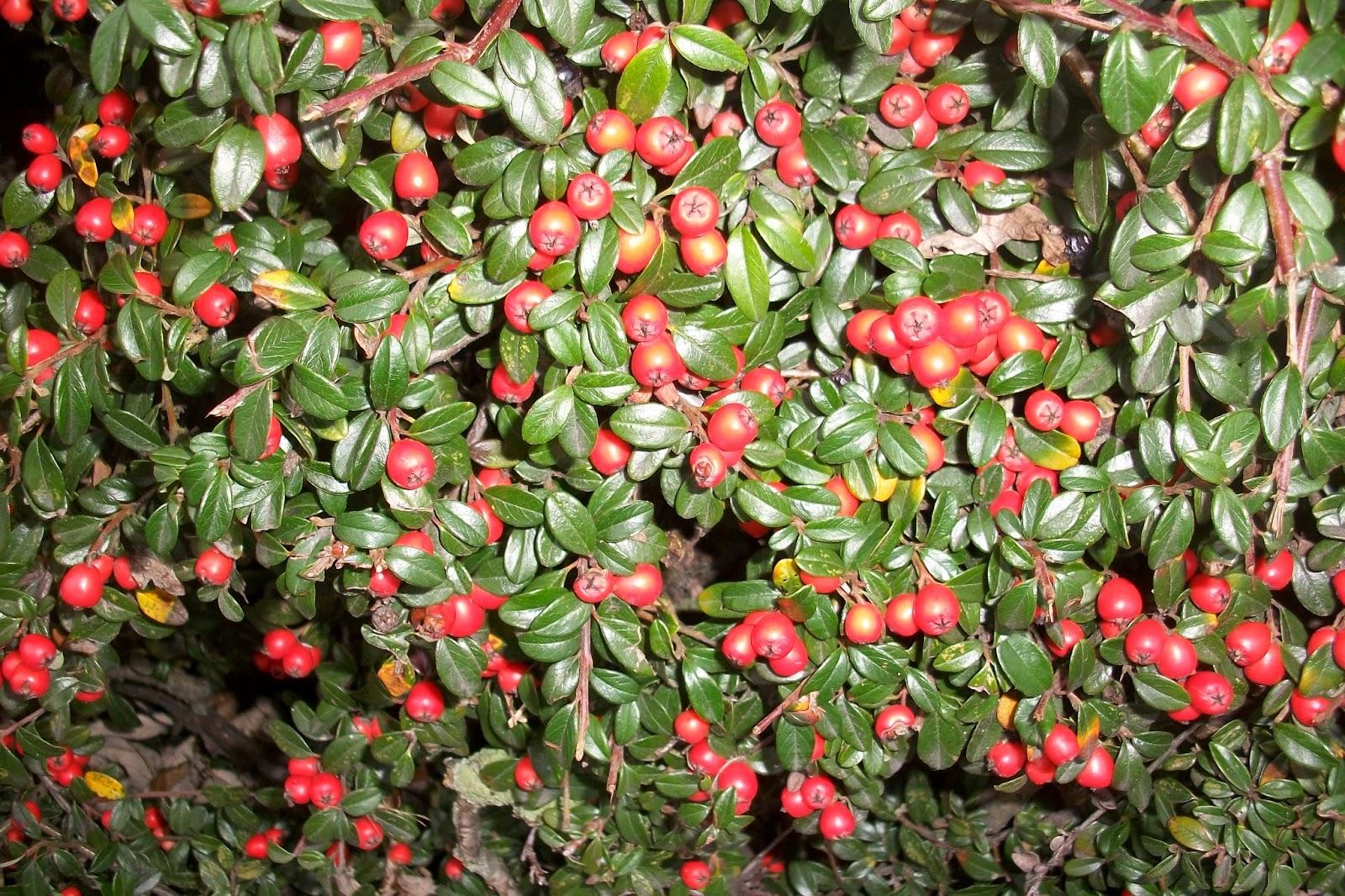 Pflanzen Er24 De Ihr Spezialist Für Preisgünstige Heckenpflanzen