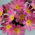 Cách cắm hoa giấy trang trí đẹp cho căn phòng của bạn
