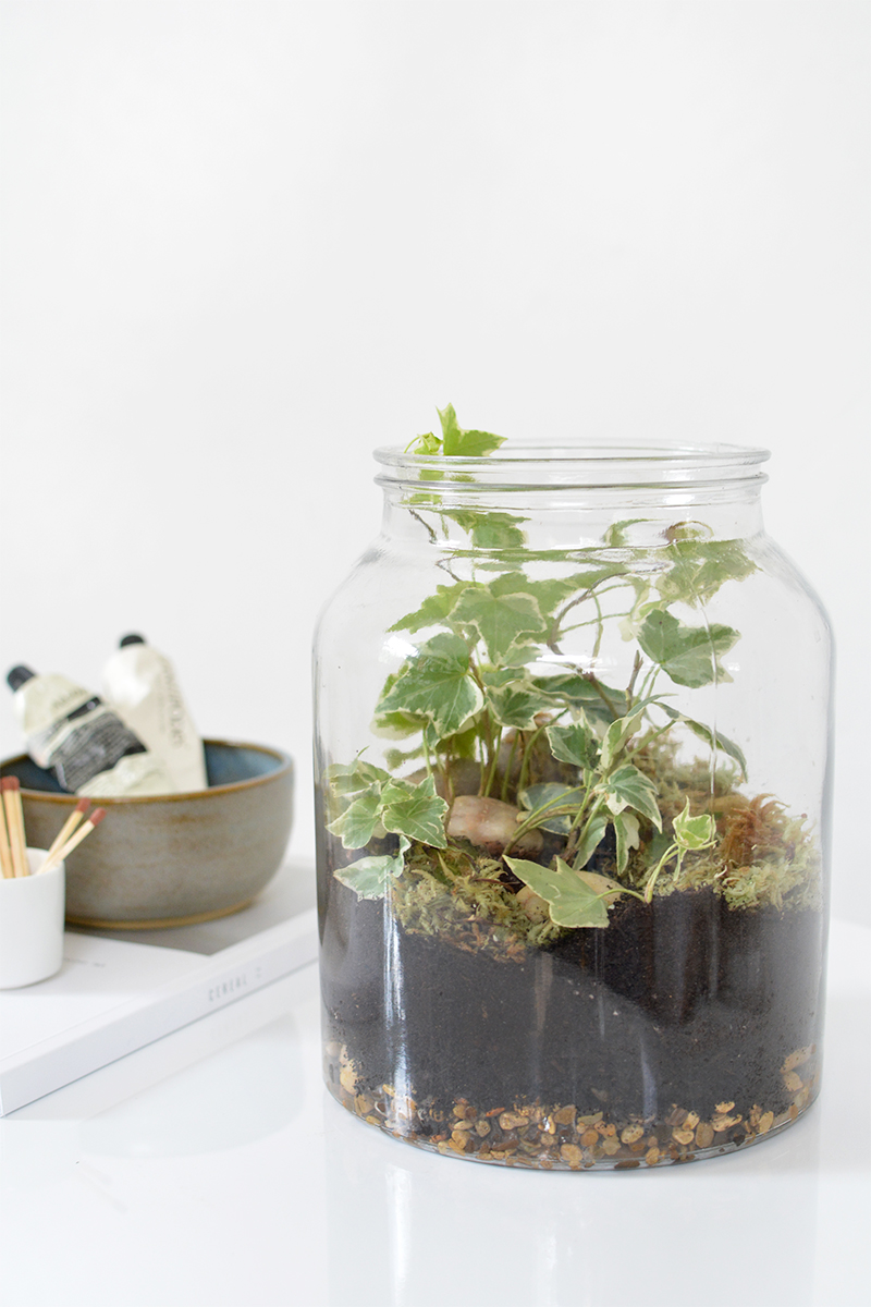 diy terrarium in a jar burkatron. Black Bedroom Furniture Sets. Home Design Ideas