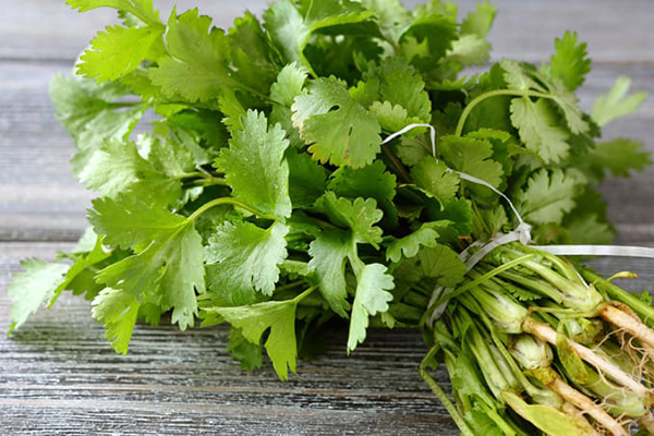 36 Benefits of Coriander Leaves for Health
