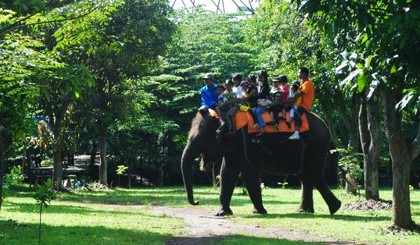 Naik Gajah di Taman Margasatwa Semarang