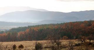 Lovely autumn colours on the ridge