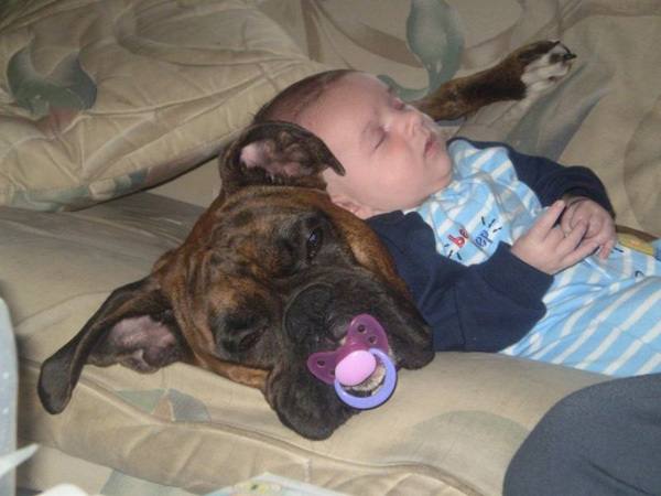 KoSong Dogs and cats have problems too but they can be good babysitters - pet babysitter