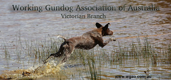 Working Gundog Association of Australia WGAA