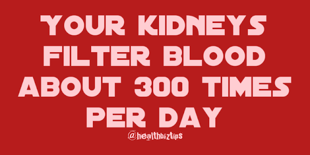 10 Health Facts & Tips: Your kidneys filter blood about 300 times per day.