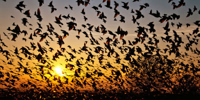 The Mystery of Bird Suicide in Jatinga, Assam, India