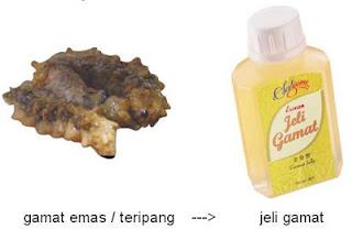 Kandungan Jelly Gamat Luxor