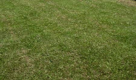 Rumah Nyaman dan Indah Mengenal jenis jenis rumput taman