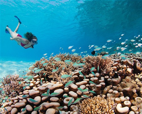 snorkelling_Best_beach_destination_review_maldives