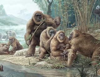 Gigantopithecus, Primata Kera Terbesar yang Pernah Ada