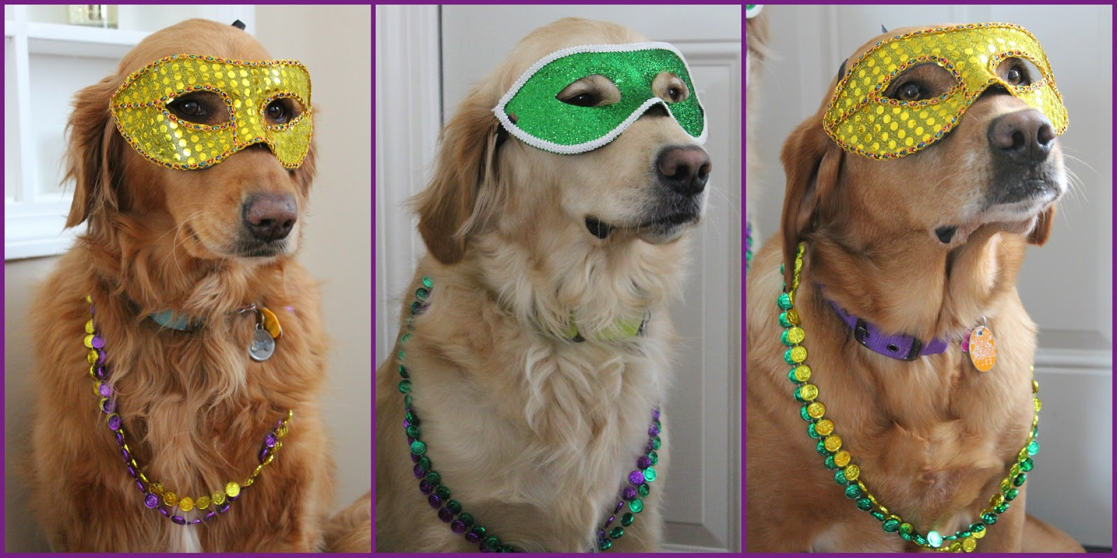 dogs dressed up for mardi gras