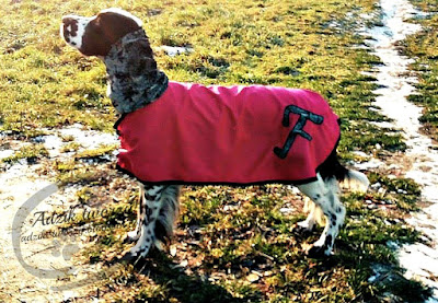 szycie ubranek dla psa rękodzieło