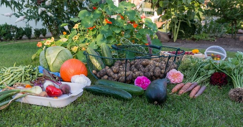 Urban Farmer (Gardening) - cover